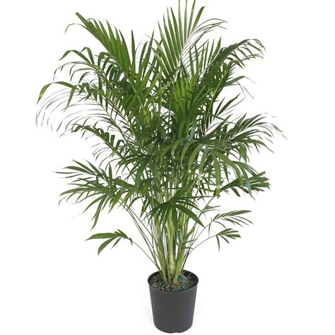 live indoor plants emejing live indoor plants images decoration design