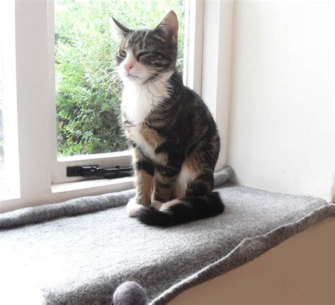 Window Sill Mat All About Different Cat Beds On Offer Pets World