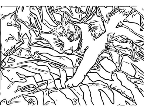 Camouflage Coloring Pages Free Coloring Pages Of Camouflage Animals by Camouflage Coloring Pages