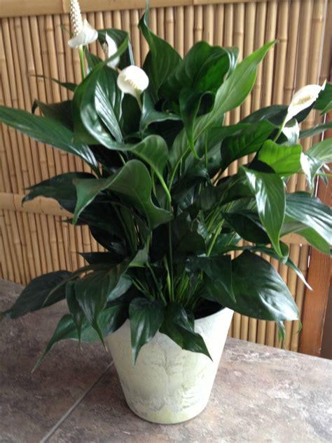 plants that thrive in low light top 10 indoor flowers that thrive in low light top inspired
