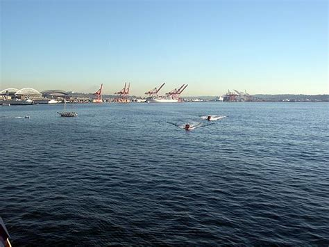 boat cruise victoria bc celebrity cruise to victoria bc elliott bay