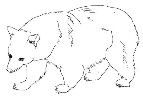 coloring page of a brown bear free printable bear coloring pages for kids