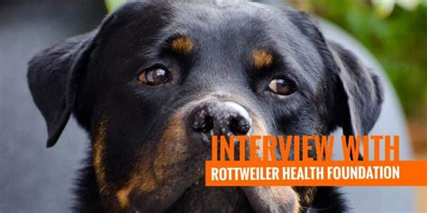 rottweiler health foundation start run and grow a kennel