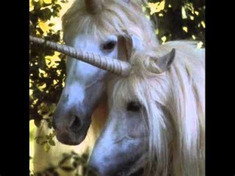 imágenes de unicornios verdaderos unicornios reales existen los unicornios youtube
