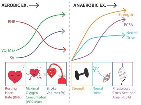 weight loss zone vs cardiovascular zone a vo2 difference exercise search cardio