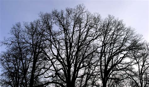 trees images file bare trees jpg