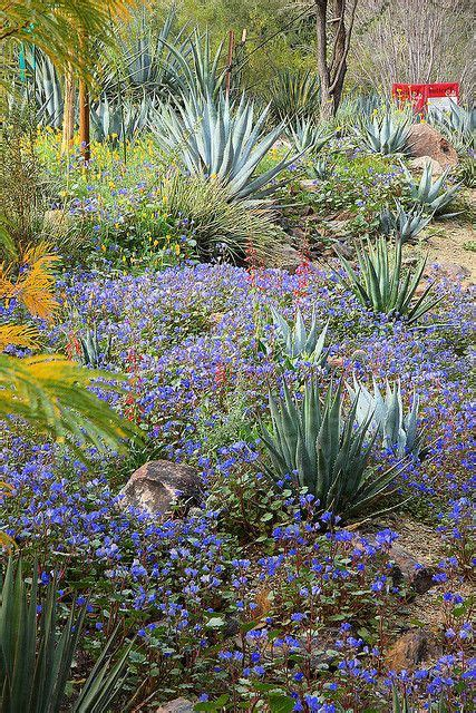 Tempe Botanical Gardens 17 Best Images About Desert Botanical Garden In On Gardens Glass And