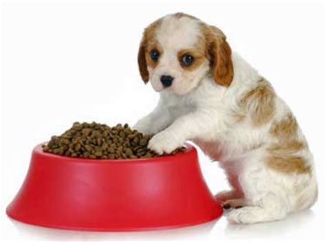 how often do puppies need to eat puppy feeding guidelines