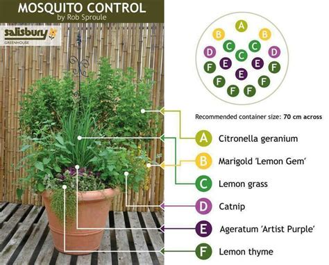 mosquito repellent outdoor yard pinterest