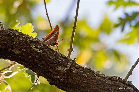 imagenes lindas de la naturaleza naturaleza cant 225 brica la mariposa m 225 s bonita y su
