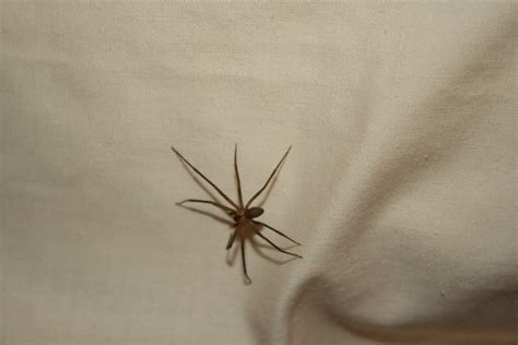 spider in my bed robyn in yellowstone the weight of snow