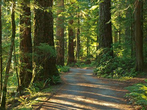 Rainforest Shoo shoot it productions llc lake quinault