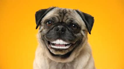 dogs with human teeth give your dentastix instead of dentures adweek