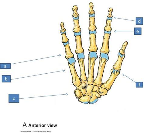 mp digits anatomy block iii wrist and hand flashcards easy notecards