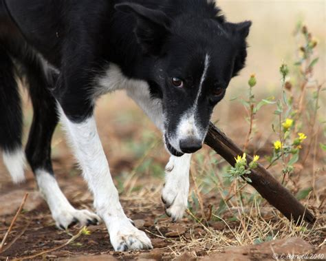 hurt puppy hurt dogs