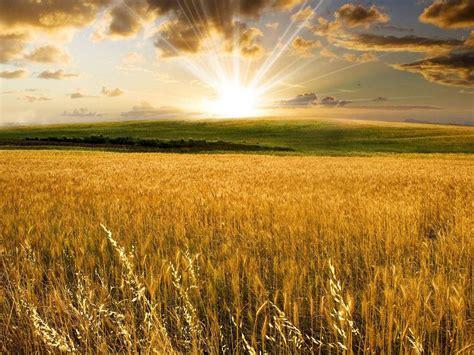 field sun clouds hill wheat nature