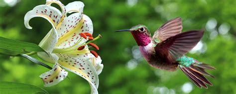 la fauna pictures la fauna terrestre santa luc 237 a