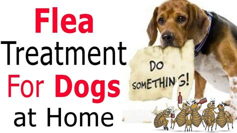 home remedies for fleas on dogs best flea treatment