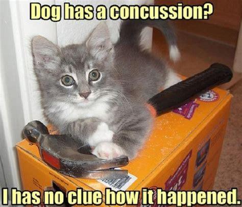 puppy concussion concussion caption pic 50 best captions