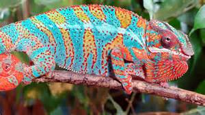 colorful animals top 10 colorful animals in the world