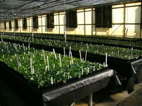 greenhouses in florida aris upgrading florida greenhouses greenhouse canada