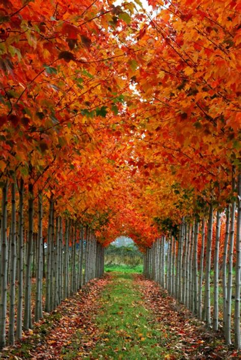 autumn colors it s written on the wall gotta see amazing photos of