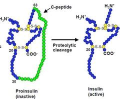 carbohydrates lipids and proteins quizlet amino acids carbohydrates lipids structure and trivia