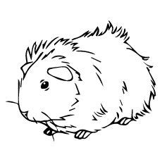 coloring page of a guinea pig drawn guinea pig color pencil and in color drawn guinea