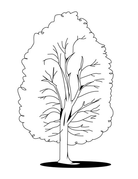 Free Printable Tree Coloring Pages For Kids Printable Tree Coloring Page