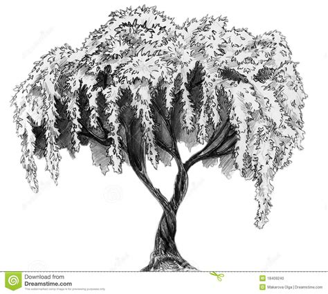 A Sketches Of Trees by Tree Pencil Sketch Stock Photo Image 18409240