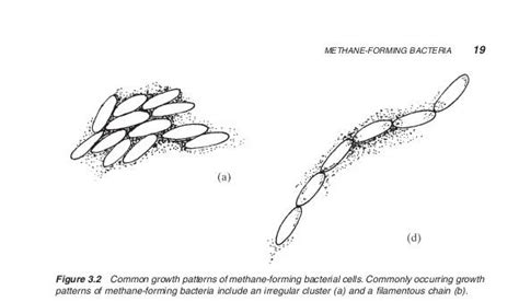gyrotactic pattern formation of motile microorganisms in turbulence energy blog methane forming bacteria