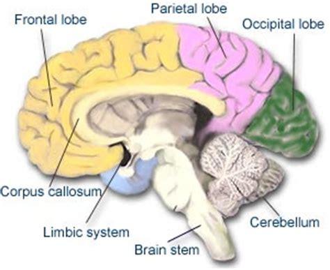 tremore interno corpo medicinamanonsolo cervello 232 fatto