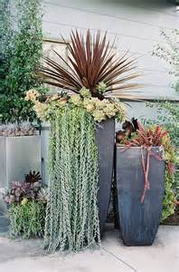succulents succulent display and planters on