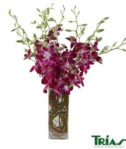 dendrobium orchids square vase trias flowers miami fl