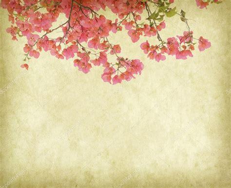 imagenes vintage fondos fondo de fondos vintage con flores de buganvilla fotos