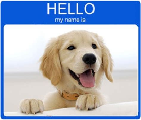 best names for golden retrievers best golden retriever names for 2017 and dogs