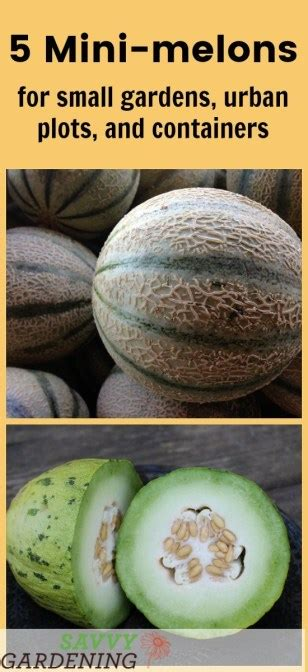 melons  small gardens  containers  easy  grow