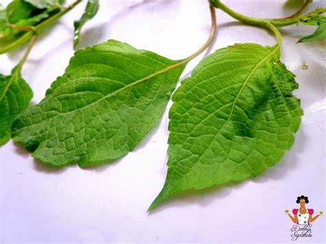 Nigerian Indigenous Herbs | dobbys signature nigerian food blog i nigerian food