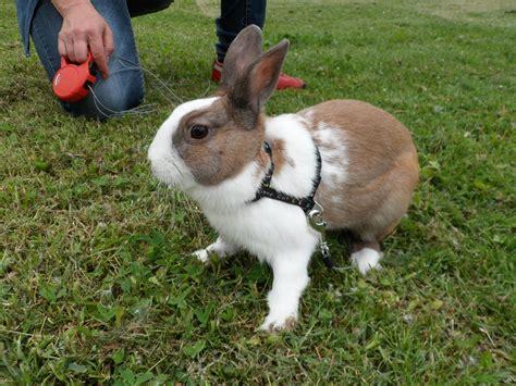 giochi di portare a spasso i cani come portare il coniglio al parco consigli per la
