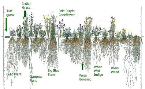 vegetable root depth landscaping with plants buren cd