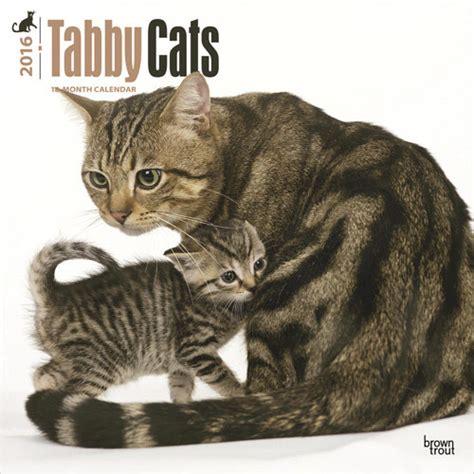 Cat Calendar 2018 Uk Cats 3 Calendars 2018 On Europosters