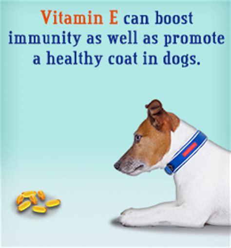 vitamin e for dogs vitamin e for dogs dosage and health benefits