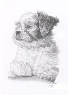 shih tzu drawings shetland pony pencil drawing print a4 size by garytymonartwork