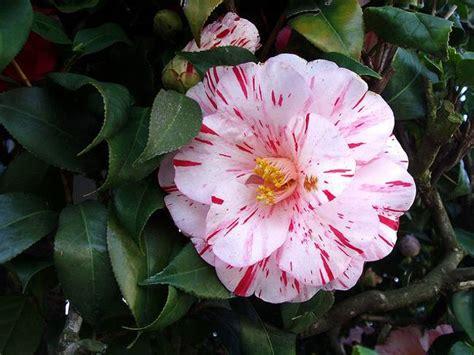 velas rom 225 nticas fotograf 237 a de archivo libre de regal 237 as rom ntica flores flores romanticas imagui