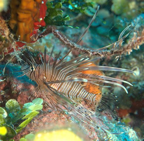 social feather duster worms underwater photographer jonathan p lavan s gallery