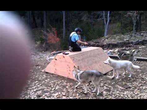 dog den dog house how to build a wolf den from scratch or an extra large dog house youtube