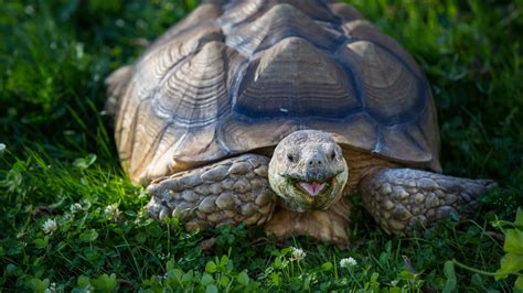 turtles background turtle hd wallpapers 19562 baltana