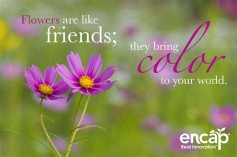 flowers   friends  bring color   world growencap quotes flowers