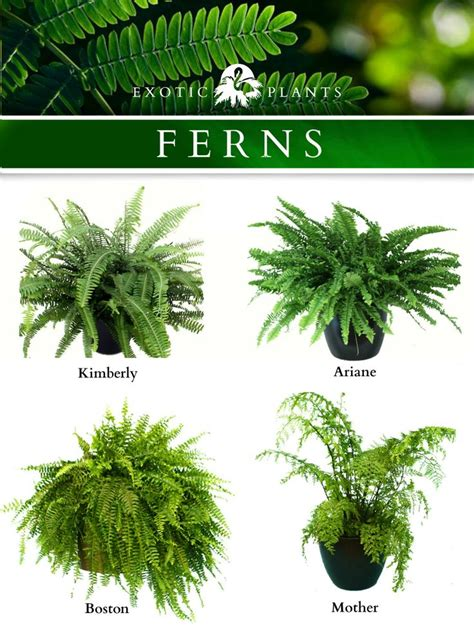 house plant types 25 best ideas about indoor ferns on pinterest indoor