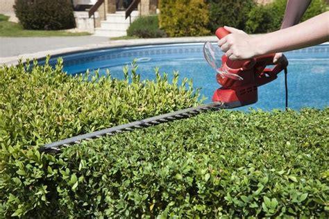 potatura piante da giardino potatura piante da giardino potature potare pianta